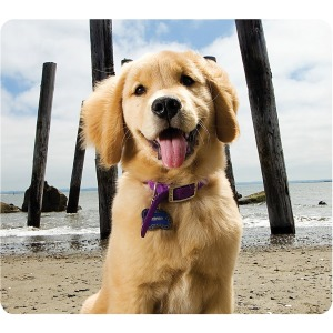 Fellowes Recycled Mouse Pad - Puppy at Beach