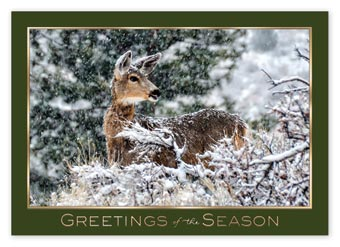 Woodland Visitor Holiday Cards