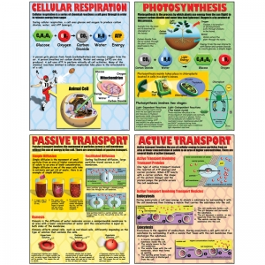 POSTER SET CELL PROCESSES
