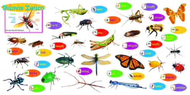 DISCOVER INSECTS MINI BBS