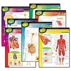 Learning Chart Combo Pack, The Human Body, 17w x 22h, 7/Pack